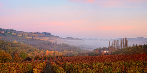 Tuscan Vineyard