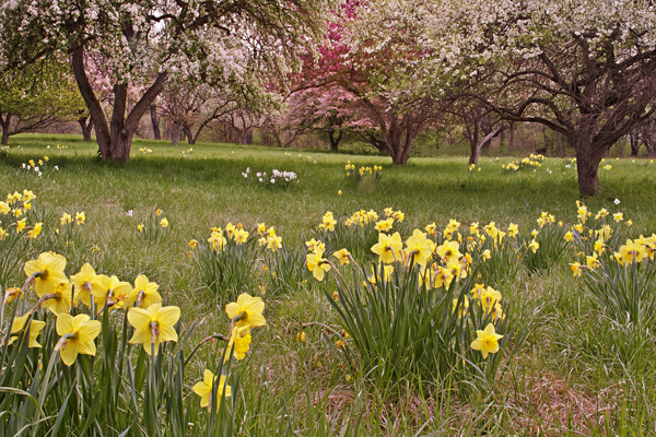 Workshop At Matthaei Botanical Gardens, April 30
