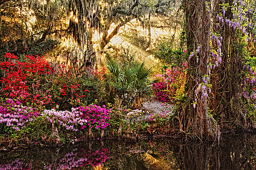 Follow the Light – Charleston Spring Photo Workshop