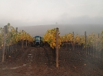 Tuscan Tractors in the Mist