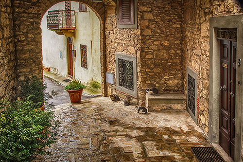 Village Cats of Chianti – Tuscan Photo Workshop