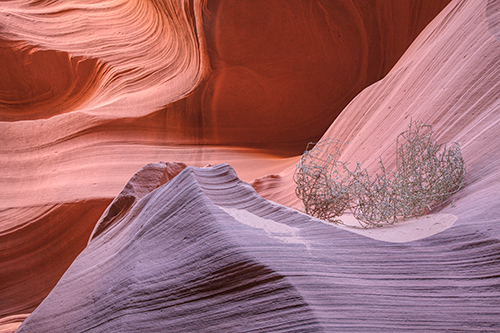 Tumble Weed - Antelope Canyon - Processed with Topaz Software