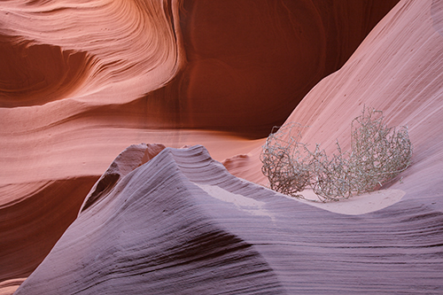 Tumble Weed - Antelope Canyon - Camera raw