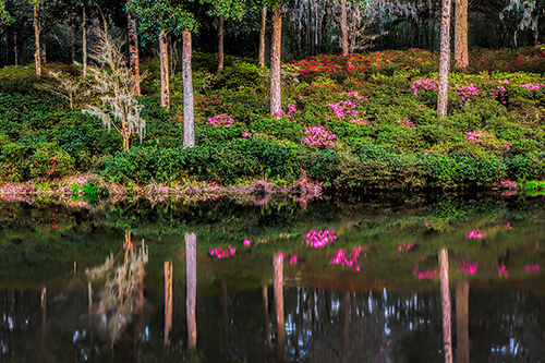 Spring Reflections-Charleston