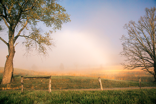 Fog Bow - Cades Cove