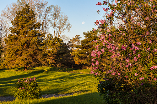 Moon Over Lilacs with a few adjustments in camera raw