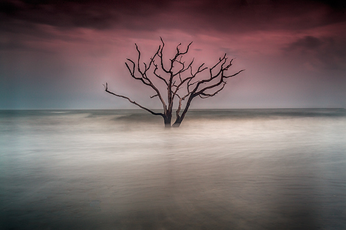 Botany Bay_Boneyard South Carolina
