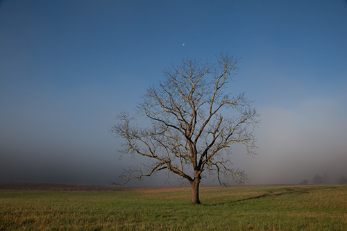 Cades Cove tree - Raw CR2