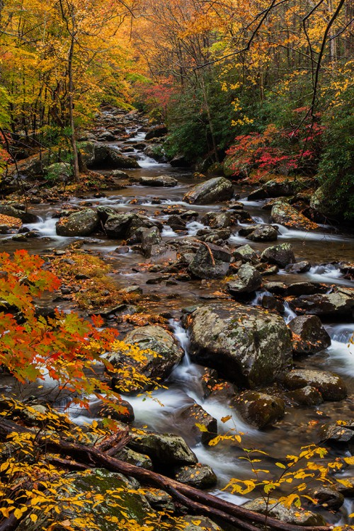 Fall colors along Little River Road in the Smoky Mountains