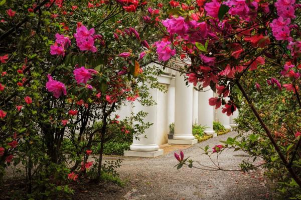 Southern Charm - Charleston Spring