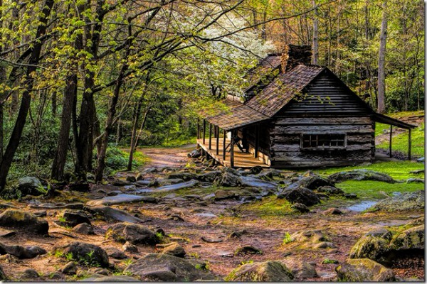 Spring Dogwoods at rustic cabin Smoky Mountains