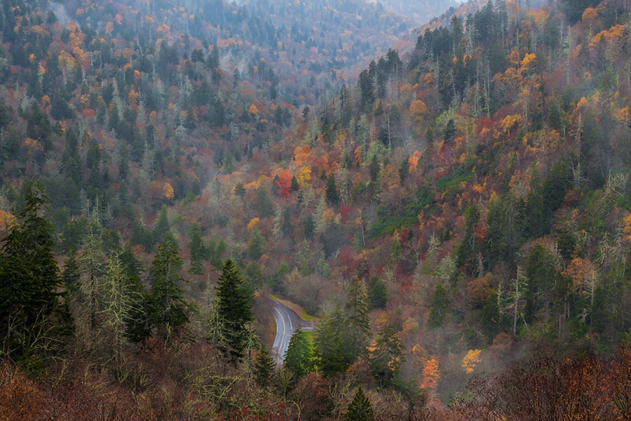 Fall Colors - Smoky Mountains