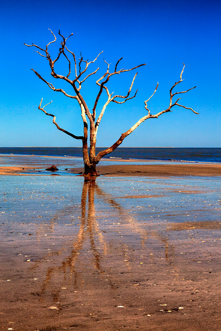 Reclaimed by the Sea - Boneyard Beach on Botany Bay Plantation