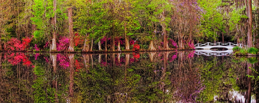 Charleston Spring Reflection 24x60